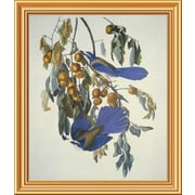 Global Gallery 'Florida Jay' by John James Audubon Framed Wall Art; 26'' H x 22.26'' W x 1.5'' D