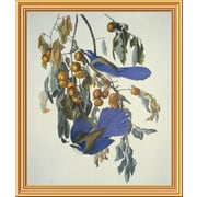 Global Gallery 'Florida Jay' by John James Audubon Framed Wall Art; 34'' H x 28.9'' W x 1.5'' D