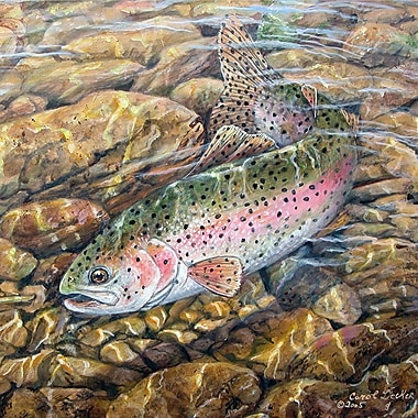 WGI GALLERY 'Rainbow Trout' Painting Print on Wood