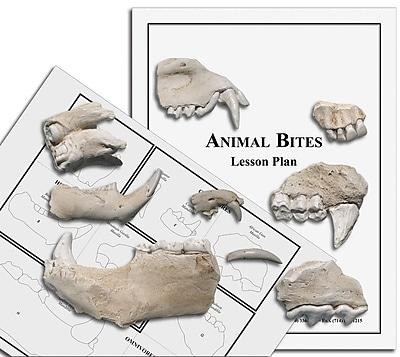 Animal Bites, Jaws/Teeth (0960-3)