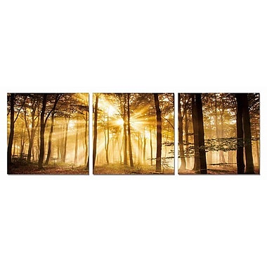Artistic Bliss Golden Mystic Forest 3 Piece Framed Photographic Print Set