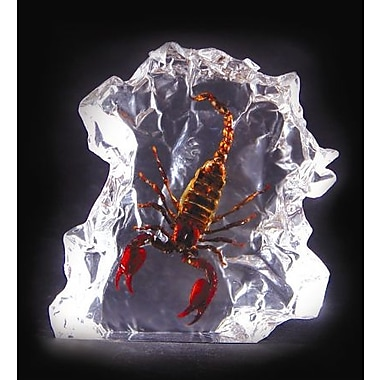 Ed Speldy East Real Bug Desk Decoration-Large-Black Scorpion (ESE025)