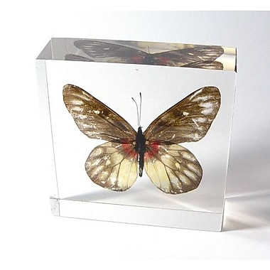 Ed Speldy East Butterfly Paperweight - Red Base Jezebel (ESE353)