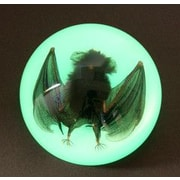 Ed Speldy East  Large Dome Paper Weight with Real Bat in Acrylic Glow in the Dark (ESE545)