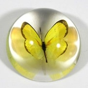 Ed Speldy East  Grass Yellow Butterfly Dome (RTL378168)