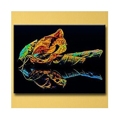Ready2hangart 'Radical Rose' by Bruce Bain Photographic Print on Canvas; 20'' H x 30'' W x 1.5'' D