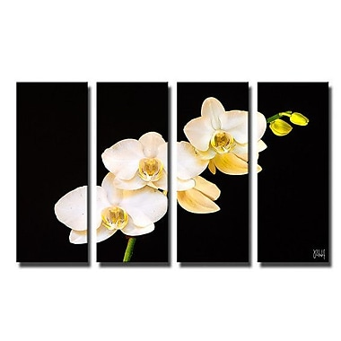 Ready2hangart 'Naturally Designed' Bruce Bain 4 Piece Photographic Print on Canvas Set