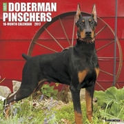 "Willow Creek Press 2017 Just Dobermans Wall Calendar 12""H x 12""W (40813)"