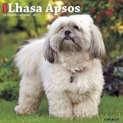 "Willow Creek Press 2017 Just Lhasa Apsos Wall Calendar 12""H x 12""W (41377)"