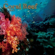 TURNER PHOTO Coral Reef 2017 Photo Wall Calendar (17998940016)