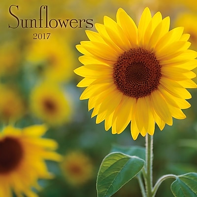 TURNER PHOTO Sunflowers 2017 Photo Wall Calendar (17998940054) 2269035