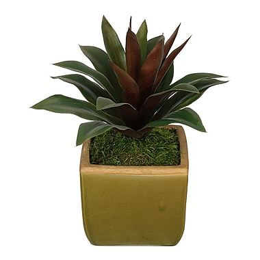 House of Silk Flowers Artificial Succulent Desk Top Plant in Pot; Green Burgundy