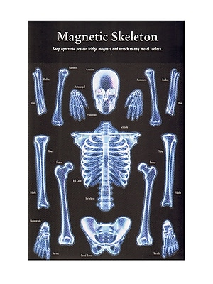 Tweet Tweet Home Magnetic Sheets Human Skeleton Pack Of 15 (GM13)