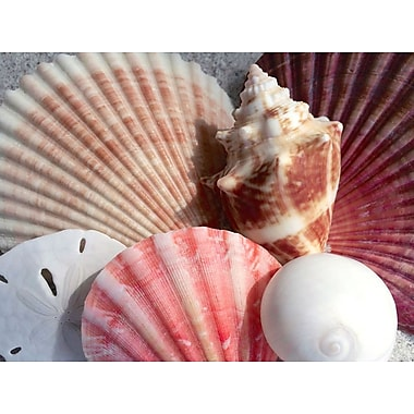 General Coastal 'Coral Scallop and White Shells' Photographic Print on Wrapped Canvas