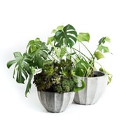 My Spirit Garden Nau 2-Piece Composite Pot Planter Set