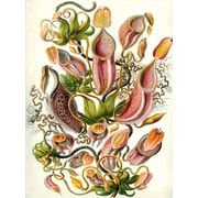 Graffitee Studios Florals 'Haeckel Nepenthaceae' Painting Print on Wrapped Canvas