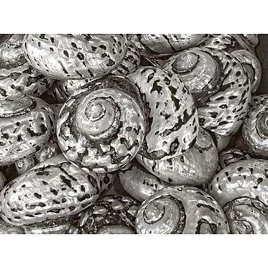 Graffitee Studios General Coastal 'Silver Button Shells' Photographic Print on Wrapped Canvas