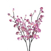 Creative Motion Orchid Flowers