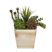 House of Silk Flowers Succulent Desk Top Plant in Planter; White-Wash