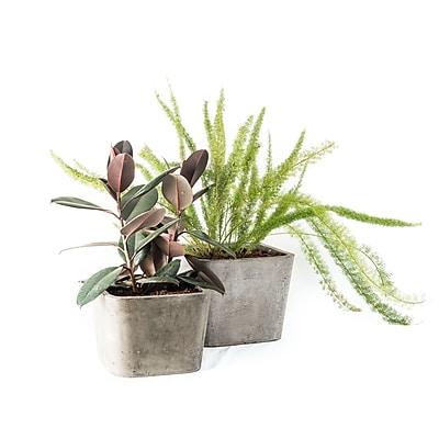 My Spirit Garden Soreno Tapered Composite Pot Planter