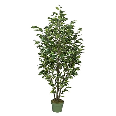 House of Silk Flowers Ficus Tree in Pot; Variegated