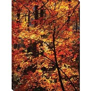 Tangletown Fine Art Autumn Leaves Photographic Print on Wrapped Canvas