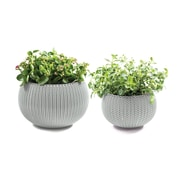 Keter Cozie 2-Piece Plastic Pot Planter Set; Oasis White