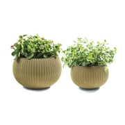 Keter Cozie 2 Piece Plastic Pot Planter Set; Citrus Green