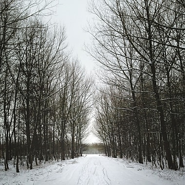 3PanelPhoto Tree-Lined Path in Winter, The Netherlands Photographic Print on Wrapped Canvas