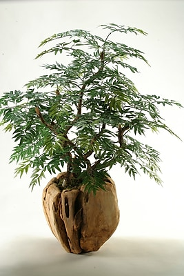 D & W Silks Ming Aralia Bonsai Tree in Planter