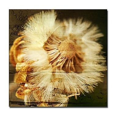Ready2hangart 'Pom Flower' Framed Graphic Art on Wrapped Canvas