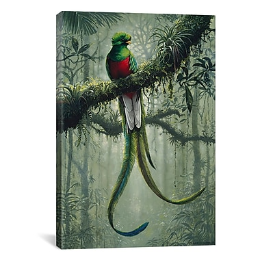 iCanvas Resplendent Quetzal 2 by Harro Maass Graphic Art on Canvas; 40'' H x 26'' W x 0.75'' D