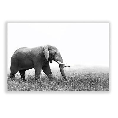 Two Palms Art Bazaar 'Roaming Elephant' Photographic Print; 30'' H x 45'' W x 1'' D