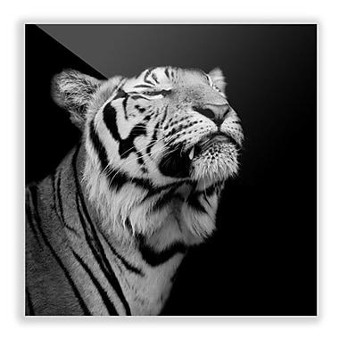 Two Palms Art Bazaar 'Proud Tiger' Photographic Print Wall Art; 36'' H x 36'' W x 1'' D