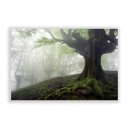 Two Palms Art Bazaar 'Foggy Forest' Photographic Print; 30'' H x 45'' W x 1'' D