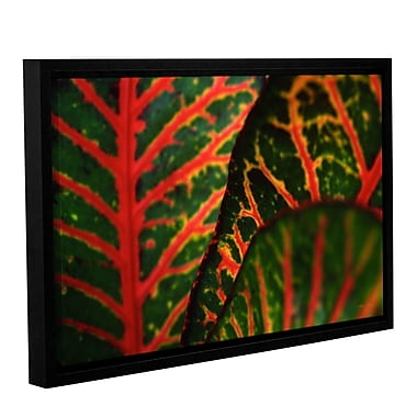ArtWall Croton Abstract by Kathy Yates Framed Photographic Print; 32'' H x 48'' W