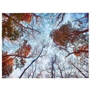 Majestic Mirror Rectangular Forest at Fall Glossy Photographic Print on Canvas