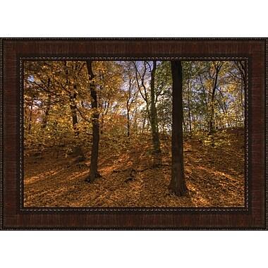 Tangletown Fine Art Sun Spackled Wood by Curt Kellett Framed Photographic Print