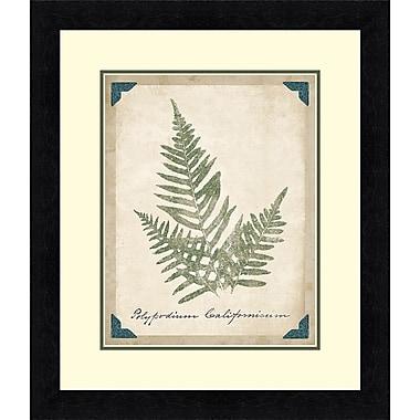 Tangletown Fine Art Vintage Ferns XI Framed Graphic Art