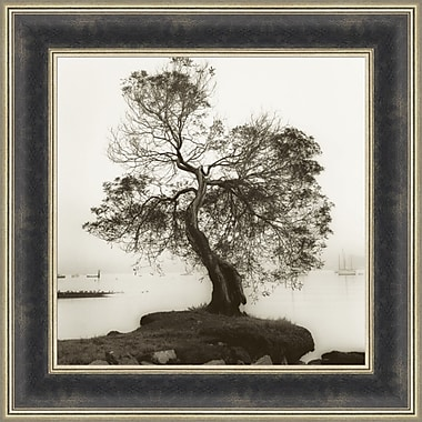 Tangletown Fine Art Coast Oak Tree by Alan Blaustein Framed Photographic Print