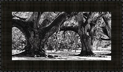Tangletown Fine Art Majestic Oaks II by Jeff Maihara Framed Photographic Print
