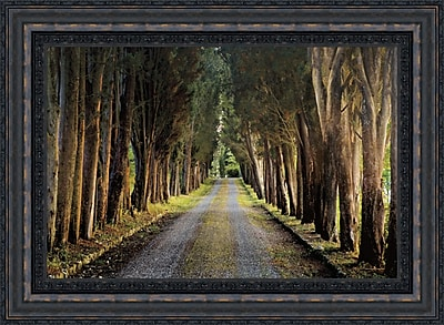 Tangletown Fine Art 'Tree Tunnel' Framed Photographic Print