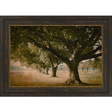 Tangletown Fine Art Island Oak by William Guion Framed Painting Print
