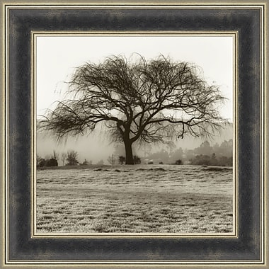 Tangletown Fine Art Willow Tree by Alan Blaustein Framed Photographic Print