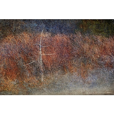 Marmont Hill Forest Abstract by Chris Vest Painting Print on Wrapped Canvas; 12'' H x 18'' W