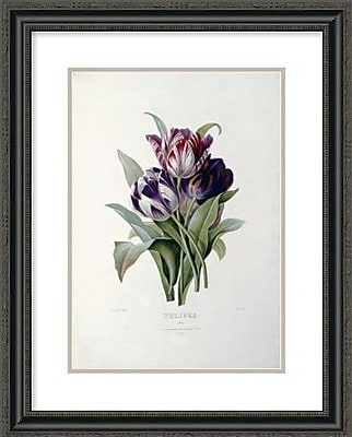 Global Gallery Tulips by Pierre Joseph Redoute Framed Painting Print; 32'' H x 25.55'' W x 1.5'' D
