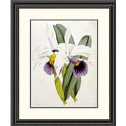 Global Gallery Lily by William Curtis Framed Painting Print; 32 inch H x 26.91 inch W x 1.5 inch D by