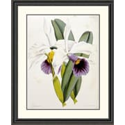 Global Gallery Lily by William Curtis Framed Painting Print; 40 inch H x 33.06 inch W x 1.5 inch D by