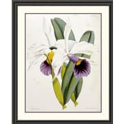 Global Gallery Lily by William Curtis Framed Painting Print; 46 inch H x 37.67 inch W x 1.5 inch D by