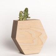 Boyce Studio Succulent Ash Pot Planter
